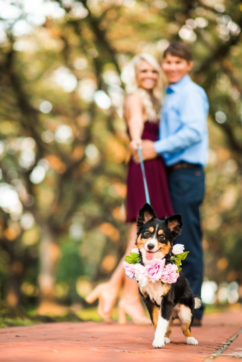 Houston Engagement and Wedding Photography with Dogs