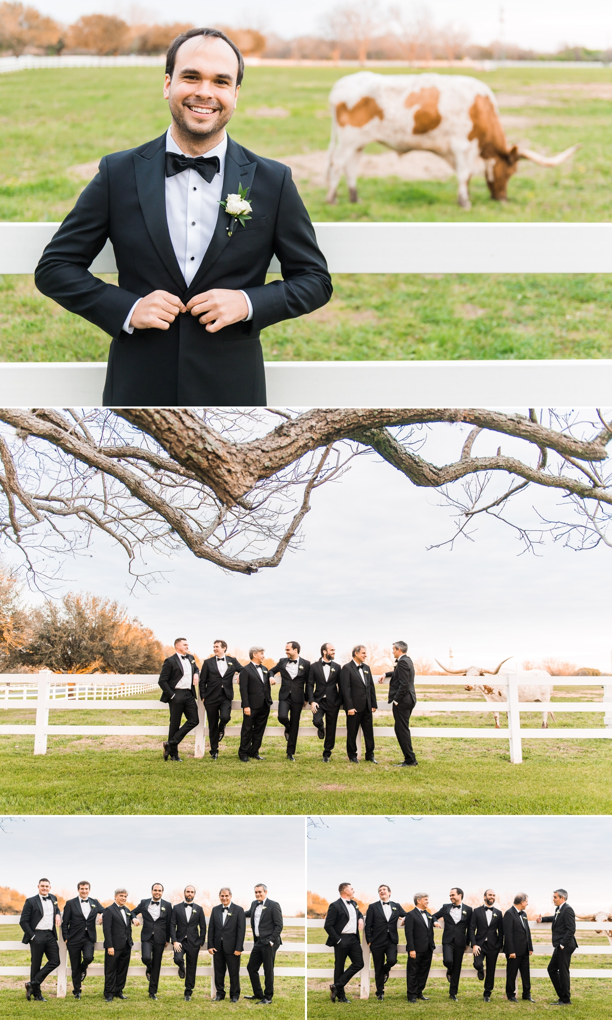 Groom and Groomsmen portraits with Texas Longhorns at Briscoe manor